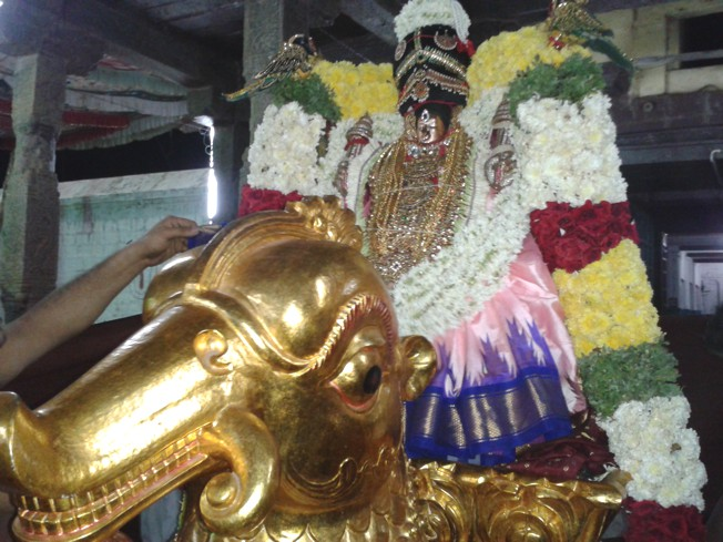 Thiruvahindrapuram_Swami Desikan_Day1_Evening_00