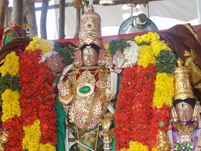 Thirucherai_Brahmotsavam_Thiurther-75