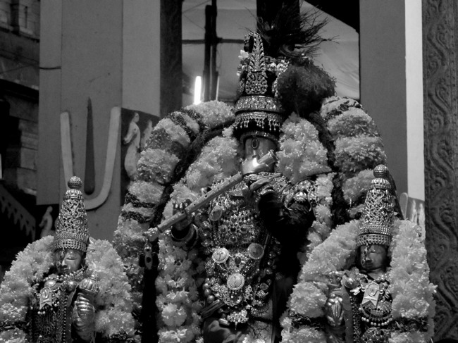 Thiruvallur Thai Brahmotsavam day 6 2014--10