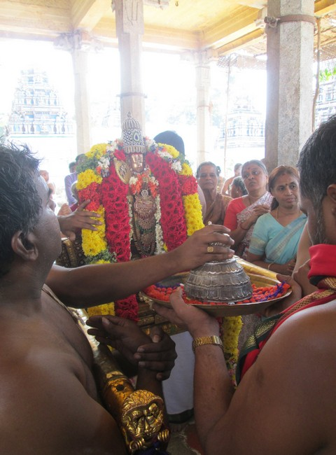 pooviruthavalli thirukachi nambigal thiru avathra uthsavam4day 1