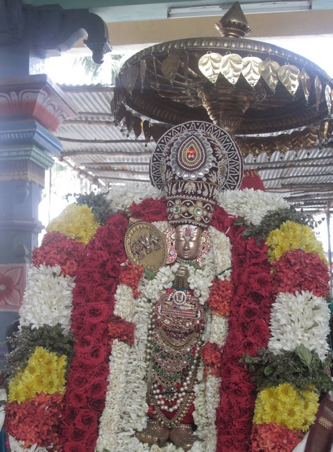pooviruthavalli thirukachinambigal thiruavathara uthsavam day 105