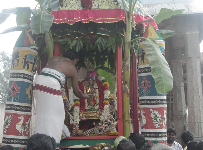 pooviruthavalli thirukachinambigal thiruavathara uthsavam day 94