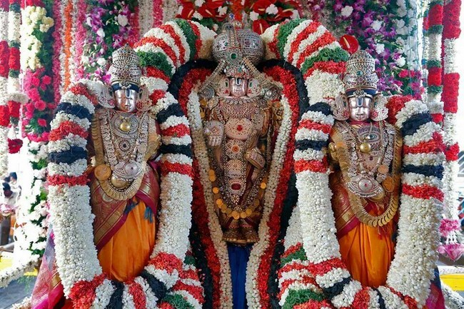Aanivara Asthanam At Tirumala Sri Malayappaswamy Temple10