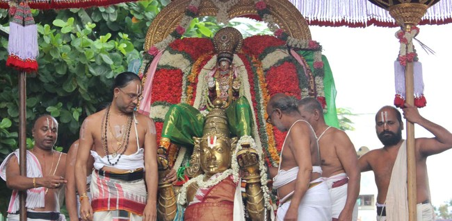 Thiruvallikeni Thelliasingar Brahmotsavam day 3 2014 4