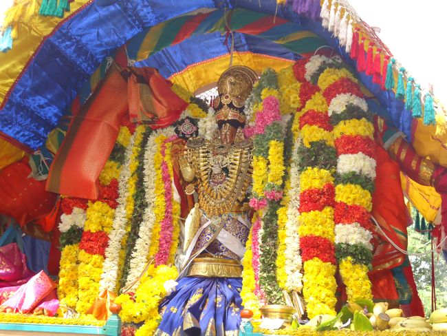 20, 21ST JAN 15 - THIRUNANGUR 11 GARUDASEVAI (157)