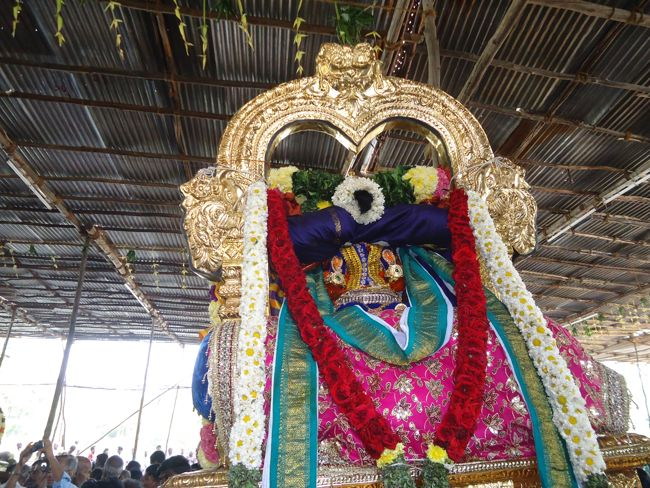 20, 21ST JAN 15 - THIRUNANGUR 11 GARUDASEVAI (221)