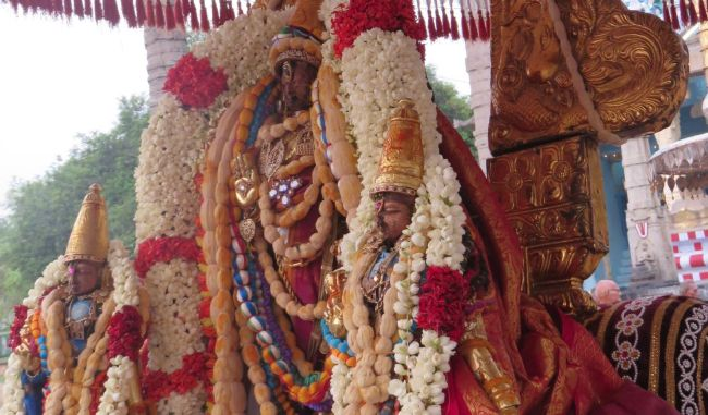 Kanchi Sri Devarajaswami Temple Pavithrotsavam day 6 -2015 06