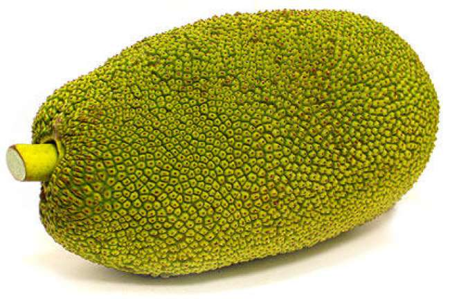 Pala-Jack Fruit_01